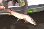 Pike on the Fly with Barry Reynolds